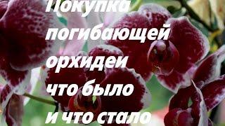 видео Как отличить здоровые корни орхидеи от гнилых