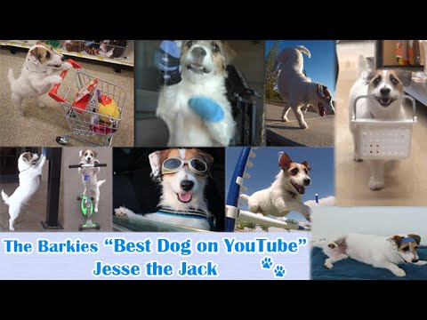 Best Dog On YouTube Just Jesse the Jack