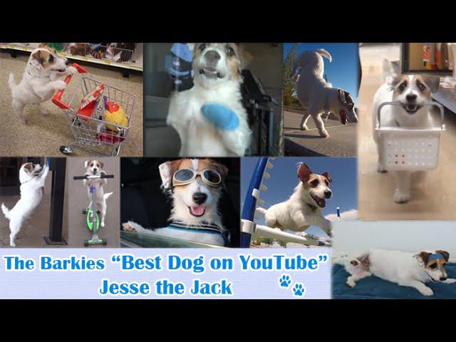 Best Dog On YouTube Just Jesse the Jack