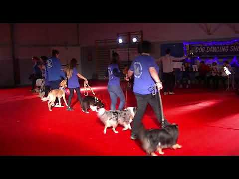 DOG DANCING SHOW 2018 : Ouverture
