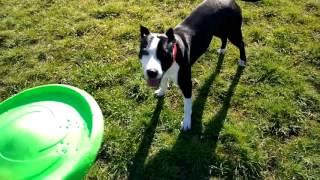 Флайбер обзор игрушки для собак, фрисби для собак, Flyber COLLAR купить