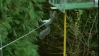 Nuttery Squirrel-proof Bird Feeders