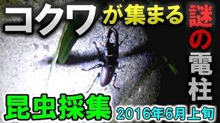 6月の上旬の昆虫採集です。今回はクワガタ以外の昆虫も採れました。 【...