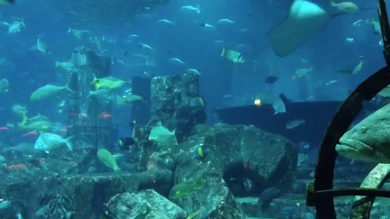 Time Lapse In Dubai Aquarium Youtube