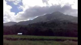 Daintree Tea Plantation