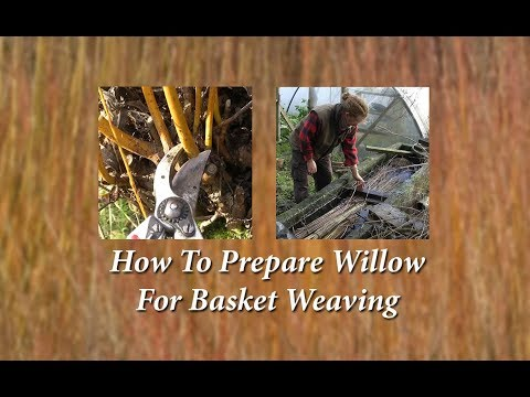 How to prepare willow for basket weaving