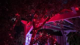 Guirlande lumineuse de Noël extérieure 13 m 160 LED rouges câble noir vidéo