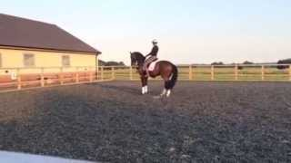 Matt Frost Dressage Demo at Priory Farm Equestrian in 2014