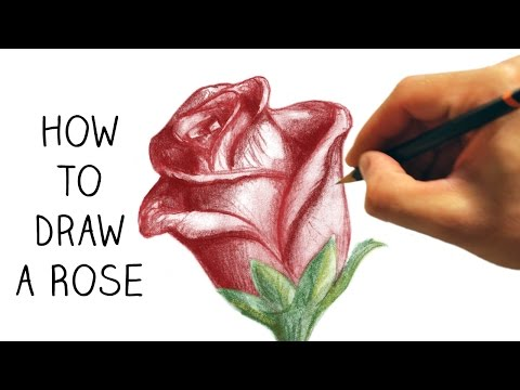 how to draw a rose step by step for beginners