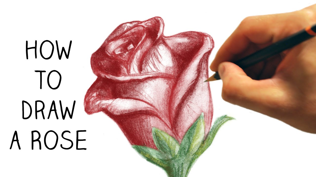 How To Draw A Rose  Step By Step  Narrated  Easy