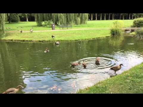 Beautiful Stuttgart Schlossgarten, Germany