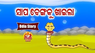 Sapa Bengaku Khaila ସାପ ବେଙ୍ଗକୁ ଖାଇଲା   Odia Moral Story For Kids | HookeHoo Tv