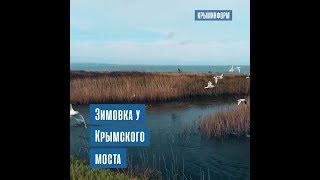 Зимовка птиц у Крымского моста