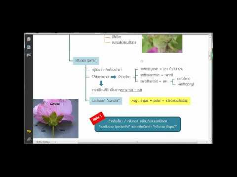 โครงสร้างดอกและชนิดของดอก part 1