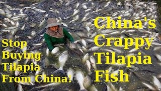 China's Crappy Tilapia Fish: The Ultimate Rant For Americans To Stop Buying Tilapia From China