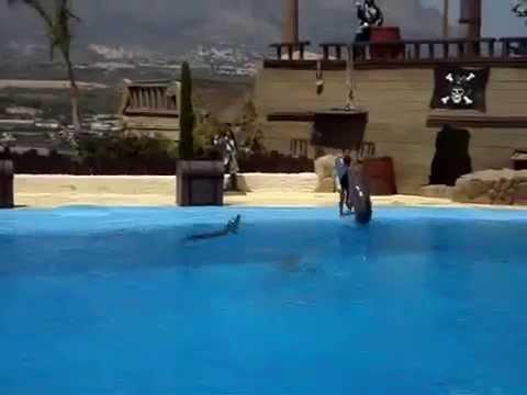 Шоу с дельфинами.