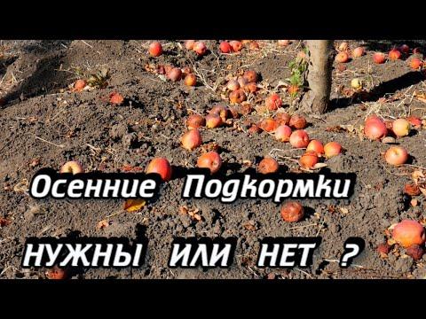 Вопрос: Можно ли вносить осенью под плодовые деревья азотные удобрения и почему?