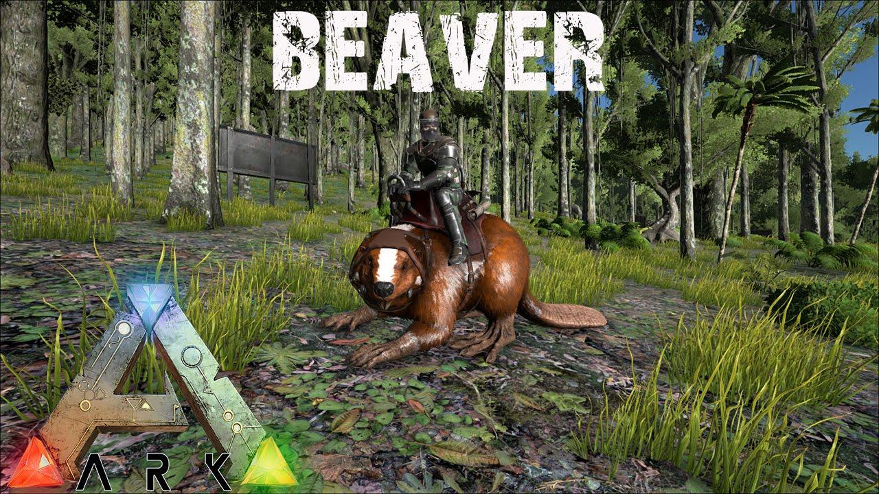 The big beaver thread, locations advice and how to make ...   Ark Beaver Dam