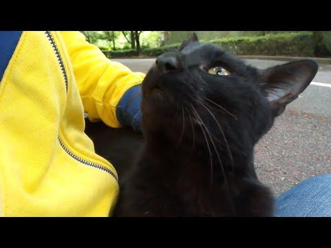 よく喋る黒猫が強烈にモフモフを要求してきた。