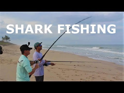 Why I Don't SHARK FISH From The Beach Anymore (How To Catch Shark Bait)