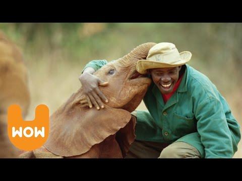 The Nairobi Elephant Orphanage