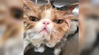 Funny Cats and Kittens Meowing Compilation   Baby Cats Cute and Funny Cat Videos Compilation part 1#