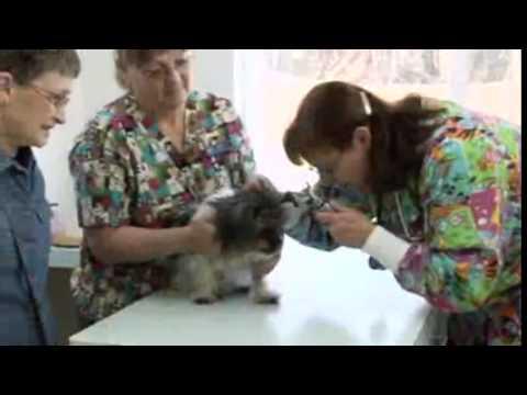 Ocean Shores Animal Hospital, Ocean Shores WA