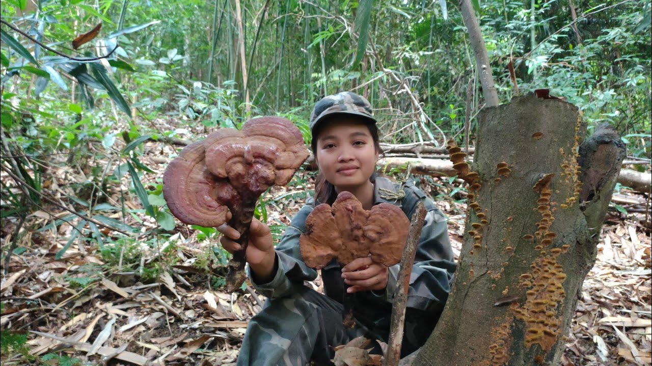 Vào rừng kiếm tiền | tập 17 | Gặp cây nấm lim xanh khổng lồ trong rừng sâu