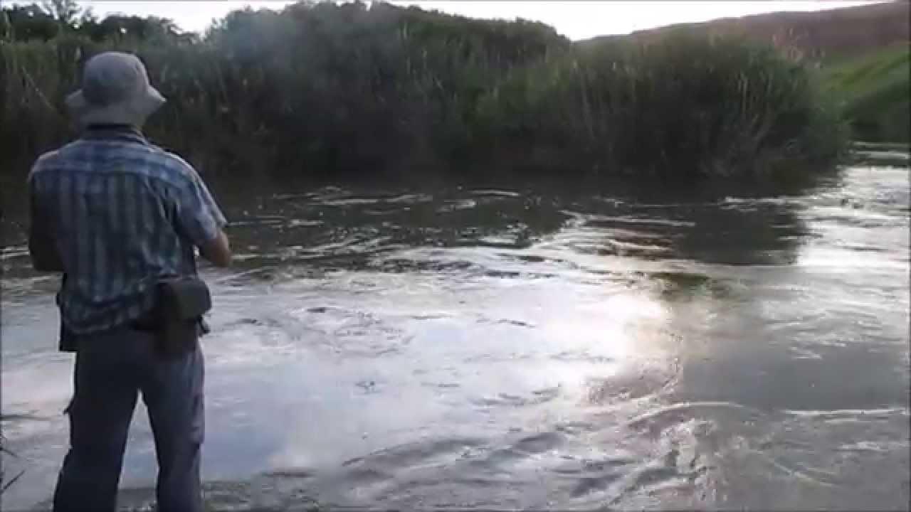 Голавль на реке Сал