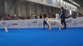 WDS 4371 - SOZVEZDIE ORION IZMIR S NEVY (пиренейская горная собака)
