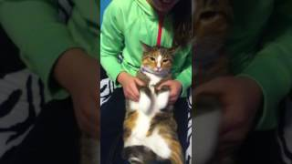 Cat does juju on that beat dance