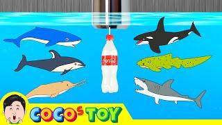 한국어ㅣ우리집 세면대 밑에 상어가 살고 있다 5, 어린이 동물 만화, 해양동물 이름 맞추기ㅣ꼬꼬스토이