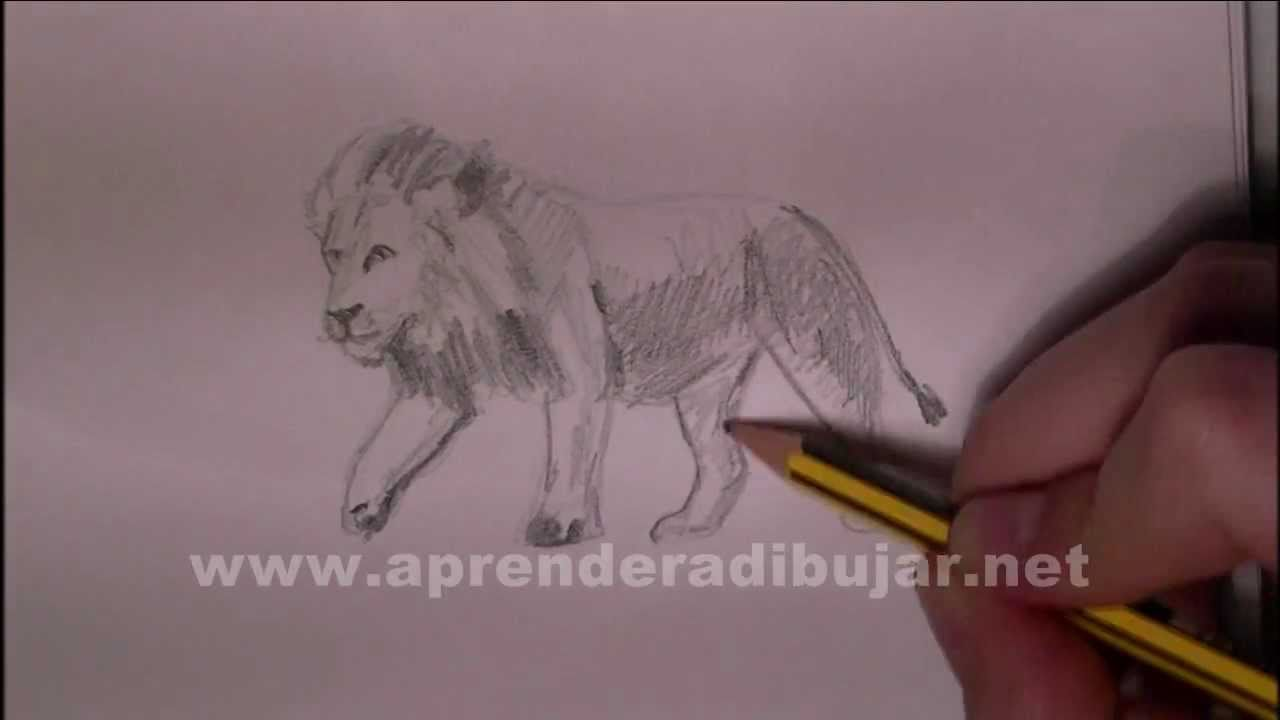 Dessin De Lion Comment Dessiner Youtube