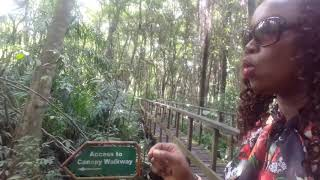 401m (the longest in Africa) Canopy Walk in the Sky @Lekki Conservation Centre, Lagos Nigeria