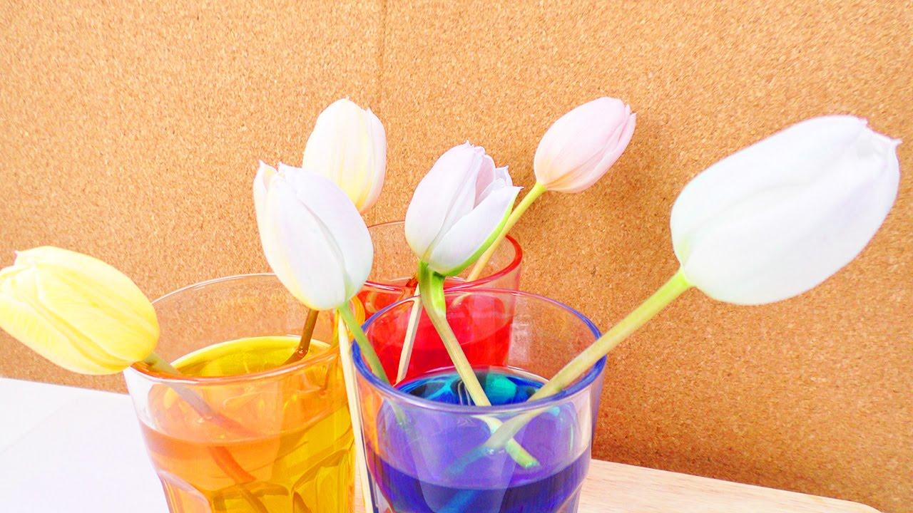 Tulpen färben mit Lebensmittelfarben | Echte Blumen beliebig färben ...