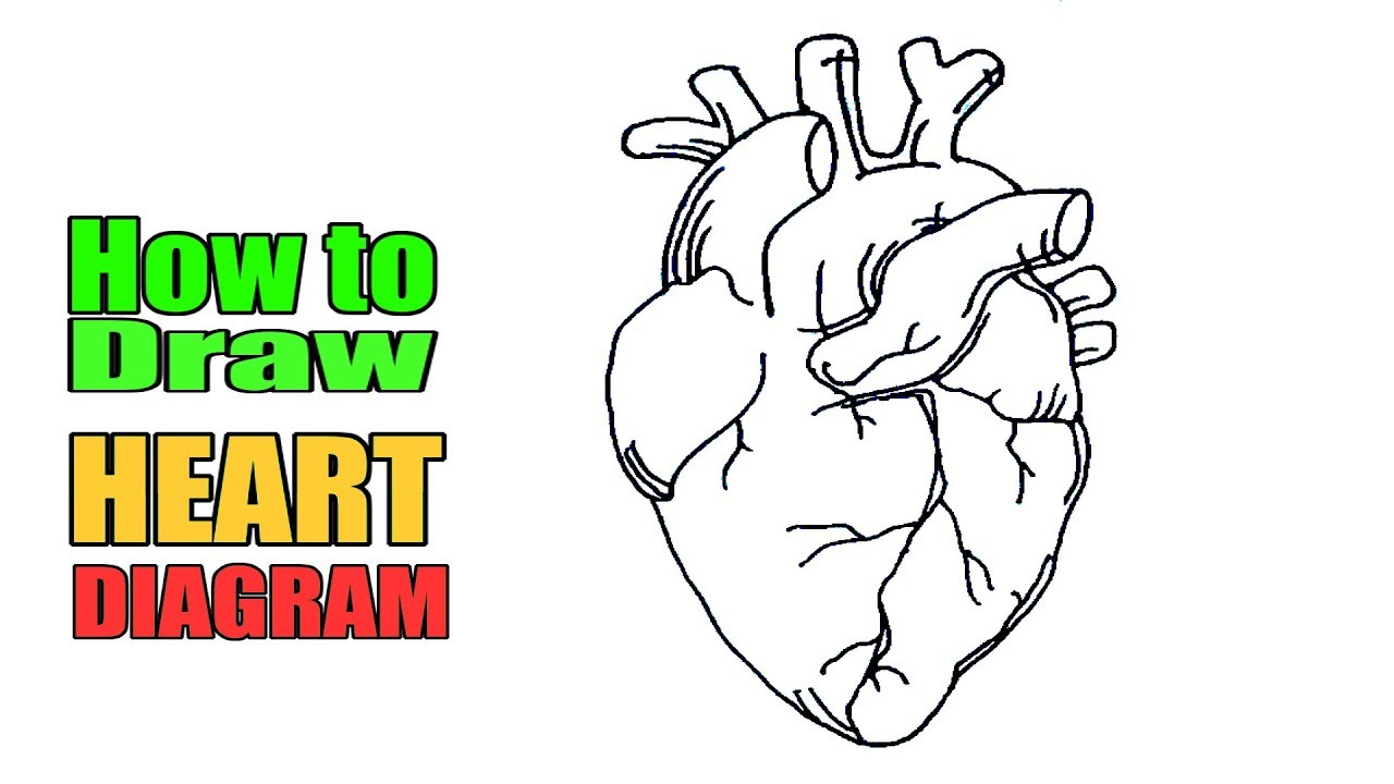How to draw Heart diagram easily | Easy way to draw human ...
