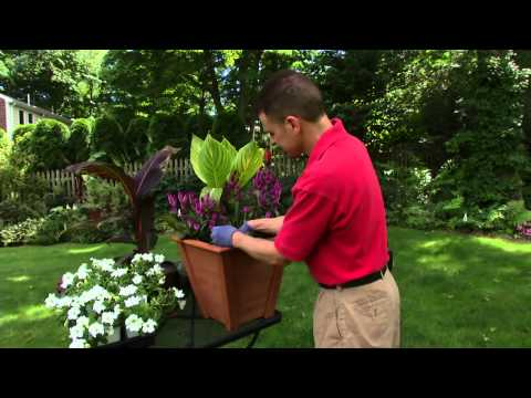 How to Build the Perfect Container Garden featuring Tropicanna canna