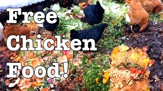 Chickens - Ideas For Feeding For Free!