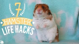 7 HAMSTER LIFE HACKS 🐹