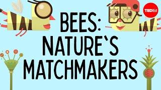 How bees help plants have sex - Fernanda S. Valdovinos