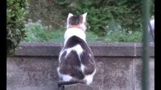 夕方いつものようにブロック塀の上であたりを眺めているのら。近所で猫...