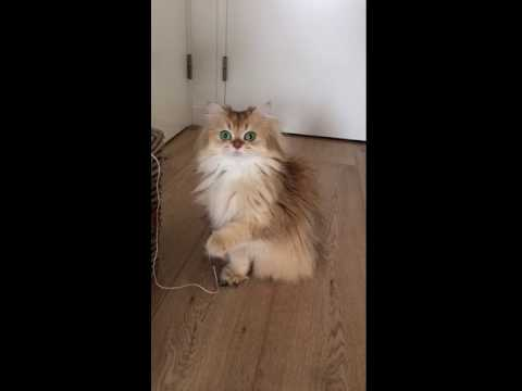 Cat Gets Caught Chewing Cable