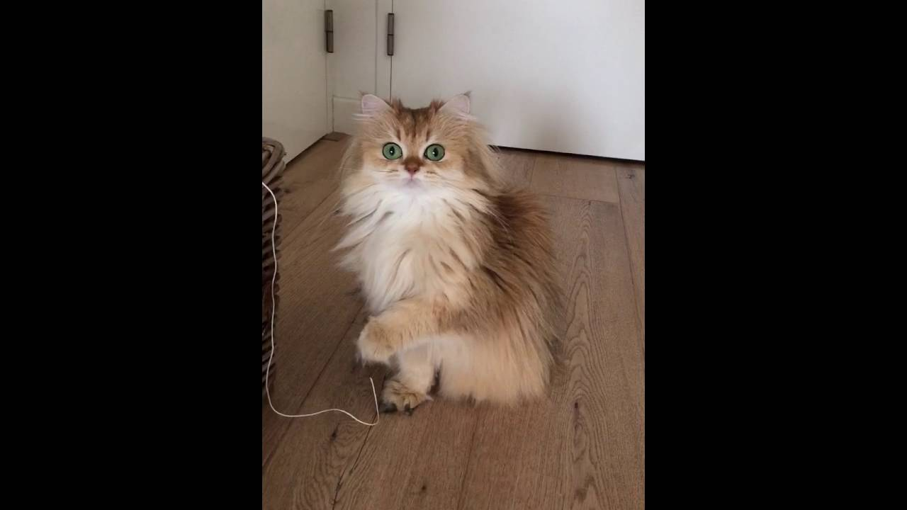 how to stop my cat from chewing wires