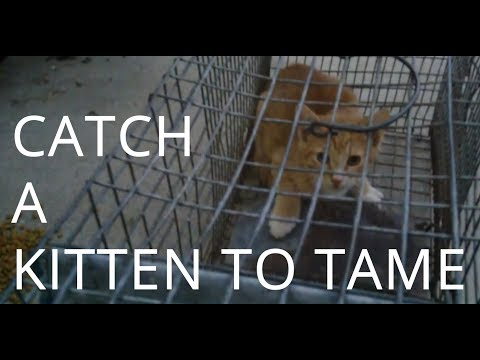 Catching and Taming a Wild Kitten - Day 0