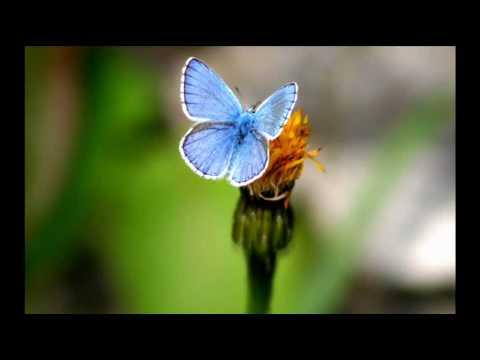 Deepfunk - Butterfly