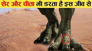इस जानवर से अच्छे अच्छे दूर भागते है 10 most dangerous desert animals lion affraid,snake in desert