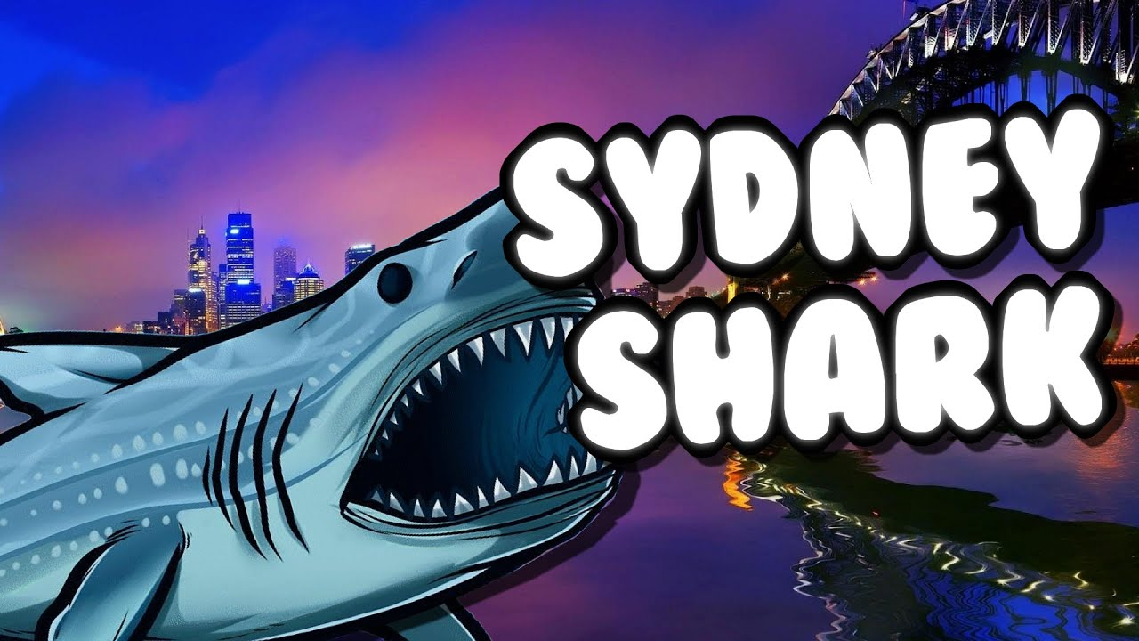 sydney shark fr requin d atilde vore tout sur son passage