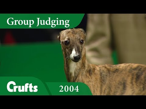 Whippet wins Hound Group Judging at Crufts 2004