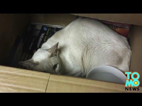 kucing terperangkap 8 hari dalam paket...