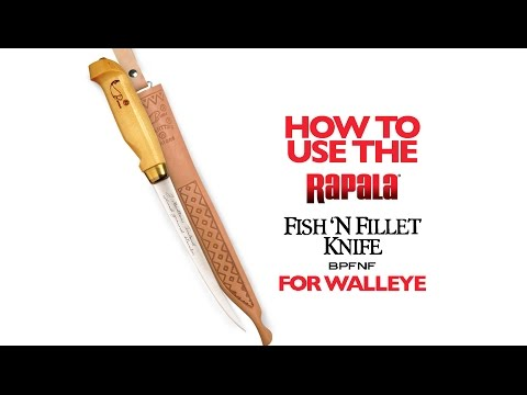 Filleting Walleyes With Rapala® Knives: HOW TO FILLET
